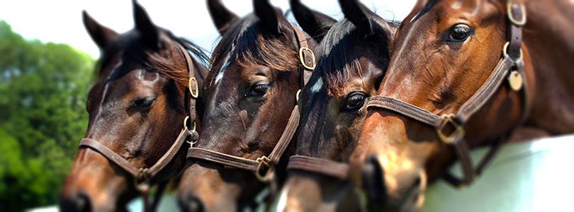 Pferdepraxis Dr. Mertens und Küppers